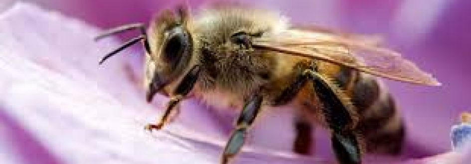 Earth Month: All About Bees