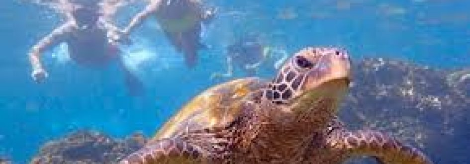Earth Month and Sea Turtles