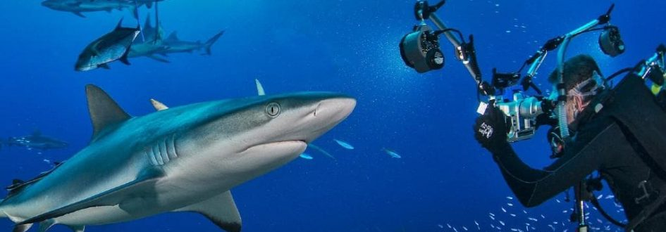 Earth Month Look at Sharks
